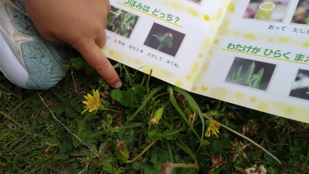 たんぽぽと葉っぱ