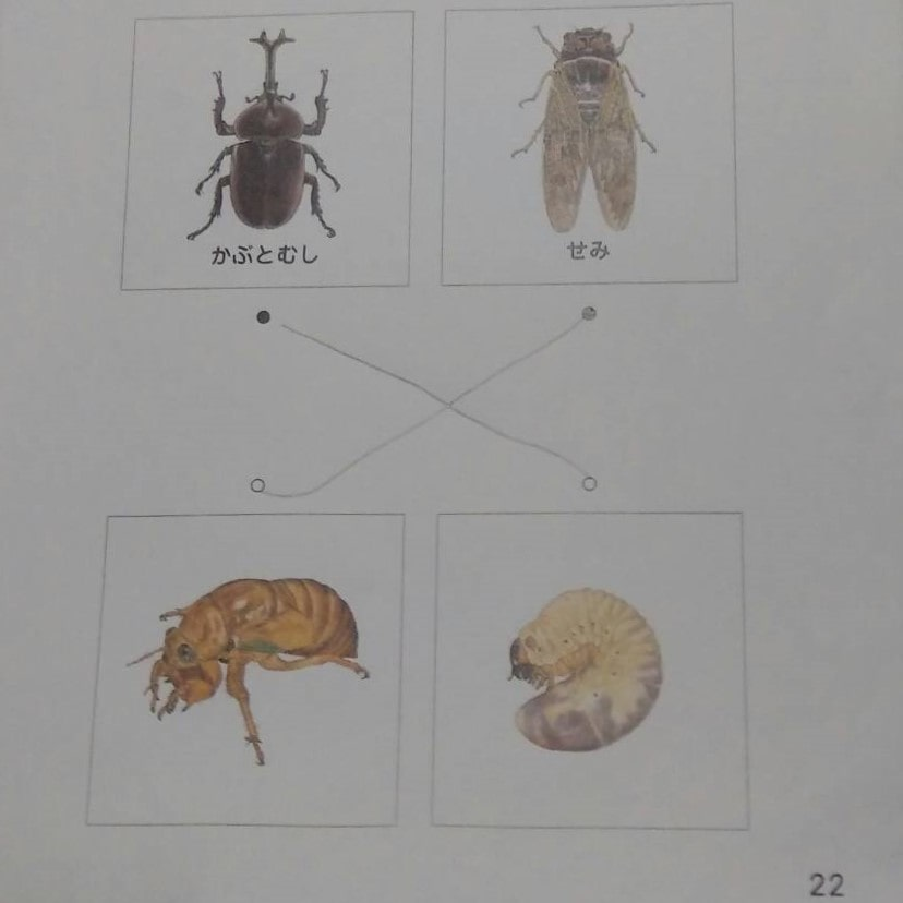 かぶとむしとセミの幼虫