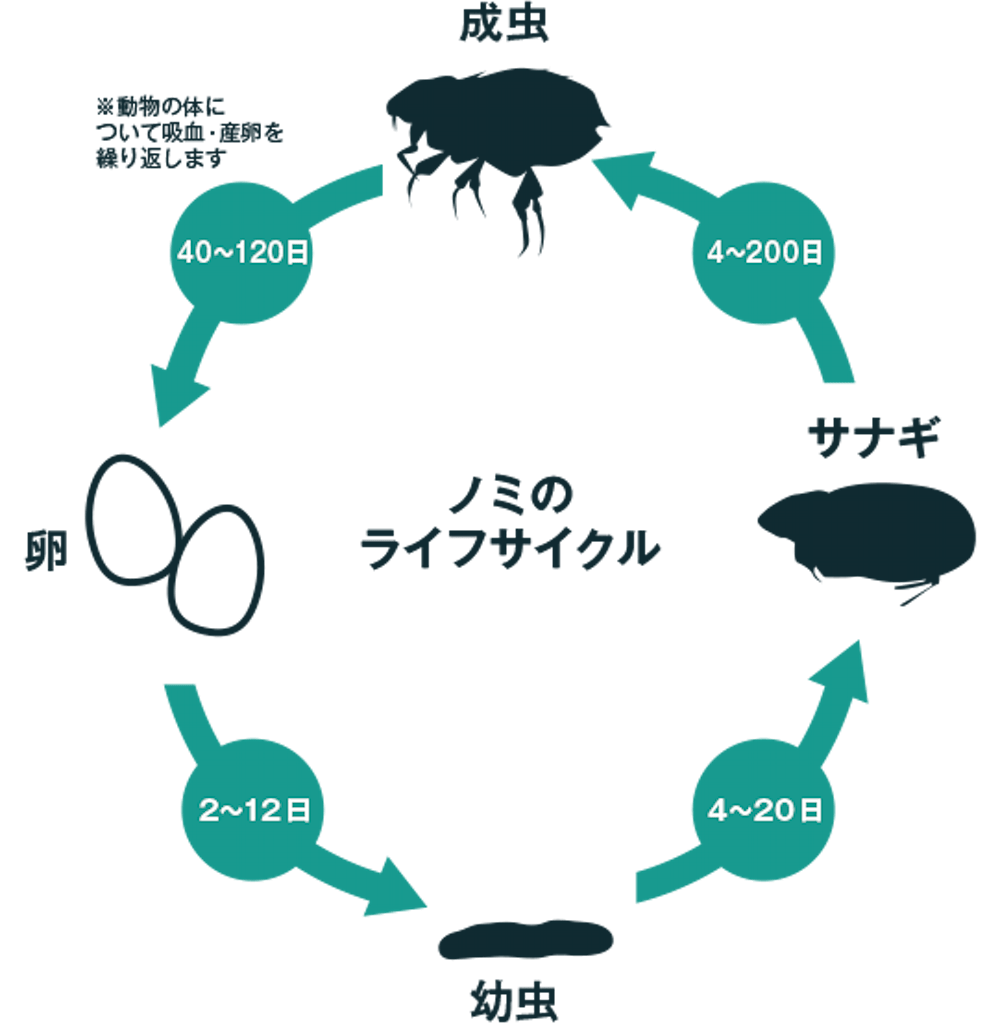 ノミのライフサイクル