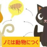 猫につくノミ